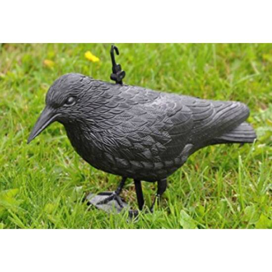 Tartsd távol a madarakat! Galambijesztő varjú